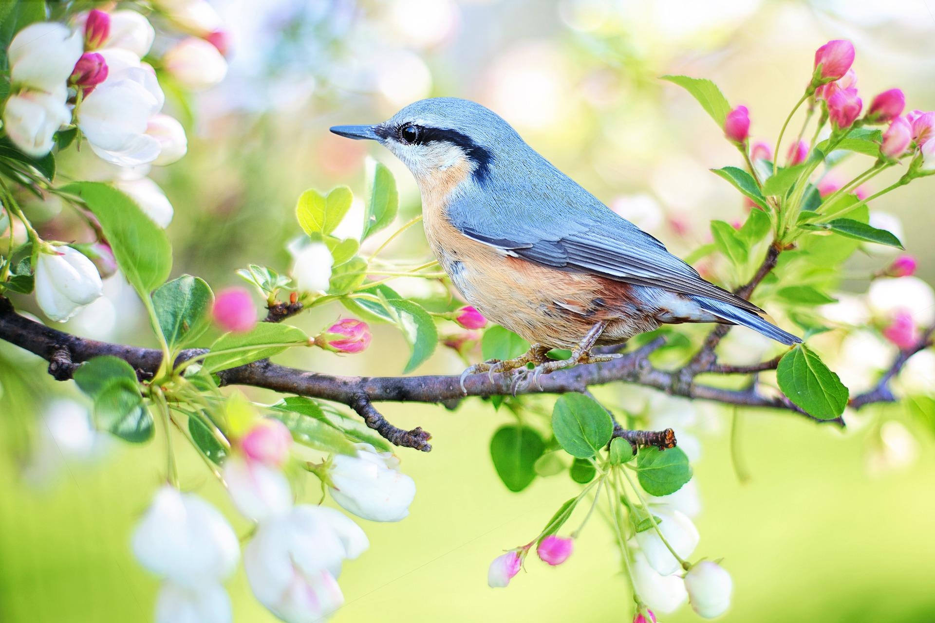 Frühling: Vogel