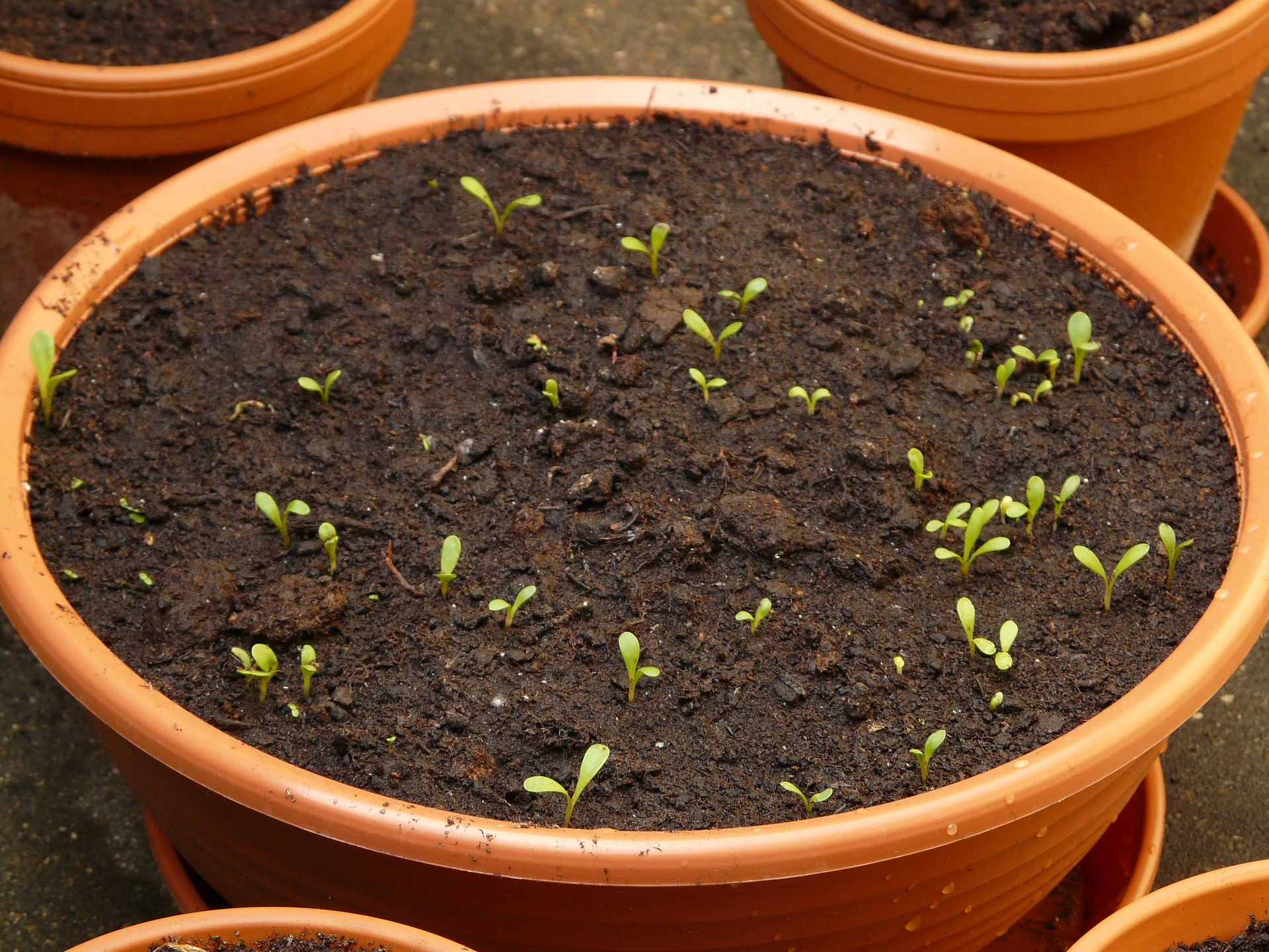 Dünger: seed